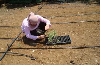مؤسسة الصفدي: مرحلة إنشاء وحدات إنتاج الزوباع في 16 بلدة عكارية